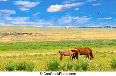 Lonely horses on meadow