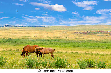 Lonely horses on steppe