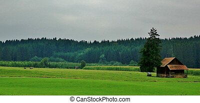 Lonely house in a field