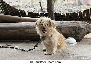 Lonely hungry dog on a chain