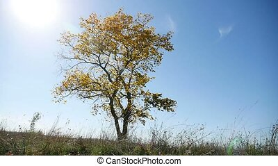 lonely in the autumn on a tree background of blue sky nature