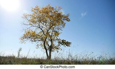 lonely in tree the autumn on a background of blue sky nature