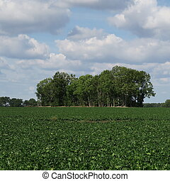 lonely landscape, of course, mecklenburg-western pomerania, ...