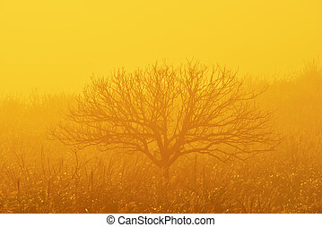 Lonely leafless tree in fog