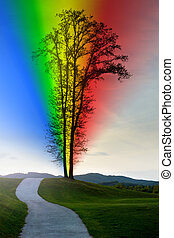 Road leading to a lonley tree with a rinbow.