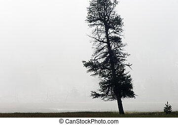 lonely - Lonely tree in Yellowstone National Park
