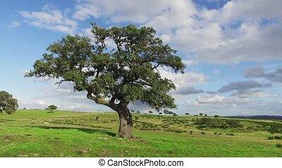 Lonely Oak Tree on a Winter Meadow
