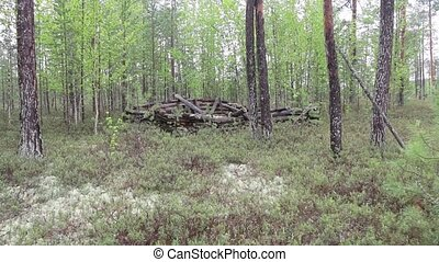 Lonely old ruined hut in the Siberian taiga.The operator...