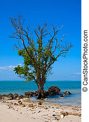 Lonely, old tree on the beach in Thailand