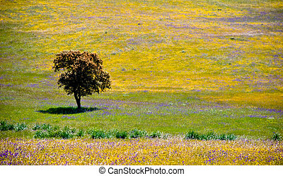 Lonely Olive tree in Andalusia, Spain.