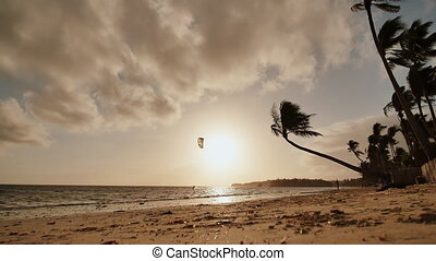 Lonely palm hanging on the beach during sunrise on Boracay. Morning kitesurfing swims on the waves. White beach at Boracay island, Philiphines.
