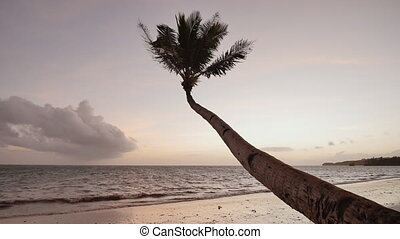 Lonely palm hanging on the beach during sunrise on Boracay. White beach at Boracay island, Philiphines.