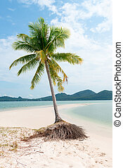 Lonely palm tree on a tropical idylic sand beach