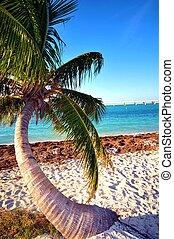 Lonely Palm Tree. Bahia Honda State Park. Florida Keys, USA.