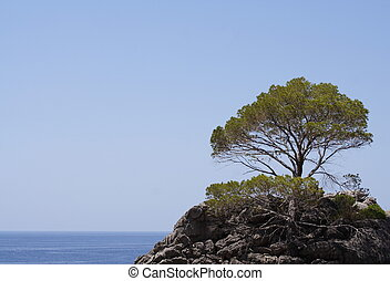 Lonely Pine - A lonely pine on a small island in the...