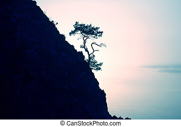 lonely pine grows on a rock in the sunlight