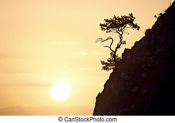 lonely pine grows on a rock in the Sunny dawn