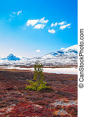 lonely pine tree on a bog with mountains in the background