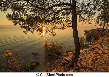 Lonely pine tree on the shore of a huge lake