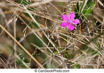 Lonely pink flower on the meadow