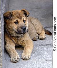 Lonely puppy - Sad dog left alone