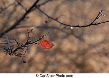 Lonely red leaf in wet autumn park - The last red leaf in...
