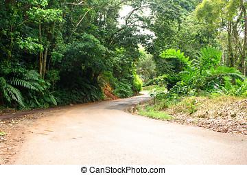 rural road - lonely rural road ciales puerto rico
