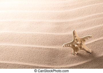 lonely sea star fish or starfish standing on the rippled beach sand