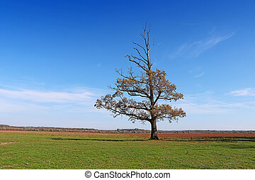 Lonely semi-dried tree on a green meadow