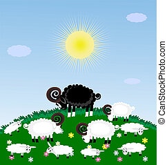lonely sheep - a green grazing white sheep and lambs, among...