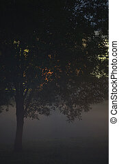 Lonely Single Tree Branches Closeup, Foggy Twilight Mist, Misty Silhouette In Low Fog Dusk, Vertical Bright Background Lit Outdoor Night Scene, Colorful Lights, Loneliness Concept, Outdoors Solitude Metaphor, Backlit Shadows, Deserted Midnight Darkness Scenery, Gentle Bokeh