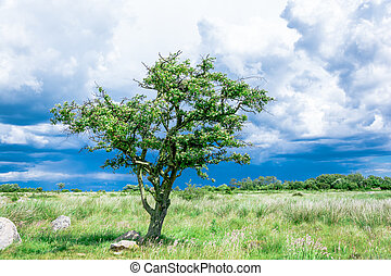 lonely single tree on the meadow before the storm