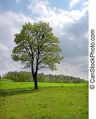 spring tree - lonely spring tree