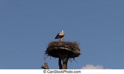 lonely stork bird