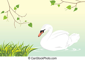 Lonely swan swimming in a pond - Lonely white swan swimming...