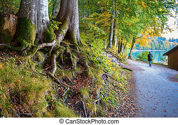 Lonely tourist walks near the lake in the autumn forest with old trees with green moss