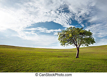 tree against the blue sky