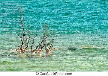 Lonely tree among waves on Dead Sea in Israel.