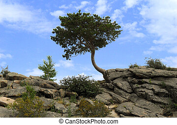 Lonely tree and bush on the rock