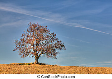 Lonely tree and chair