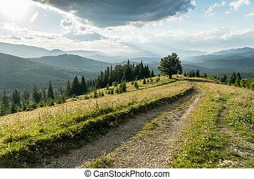 Lonely tree and dirt road in a carpathian mountains under the stormy sky
