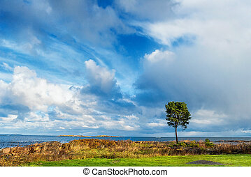 Lonely tree at sea