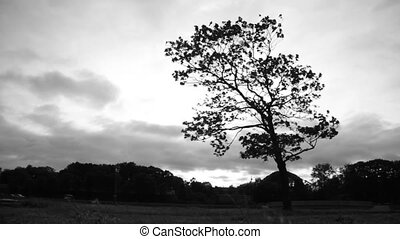Lonely tree background against the sky