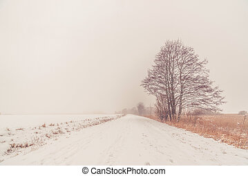 Lonely tree by the road in the winter