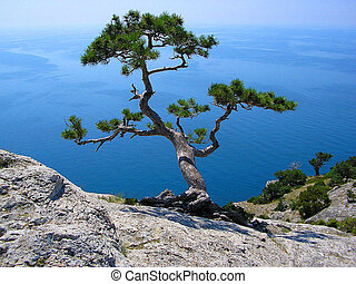 Lonely tree on a mountain
