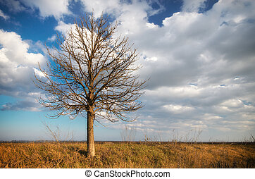 Lonely tree. Composition of nature.