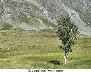 Lonely tree - endurance and power