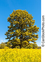 lonely tree in a bright summer field