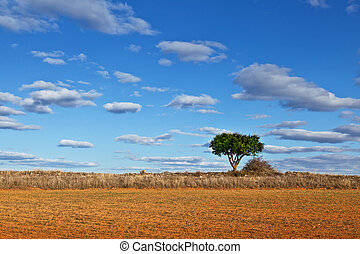 Lonely Tree in a Dry Meadow