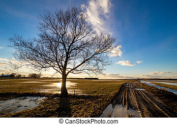 Lonely tree in a field at sunset